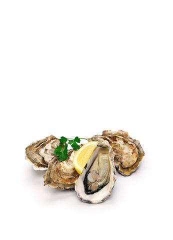 GALLERIA Petit Delice Austern